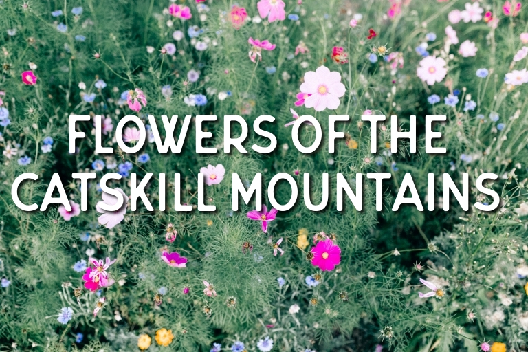 Plants and Animals of the Catskill Mountains